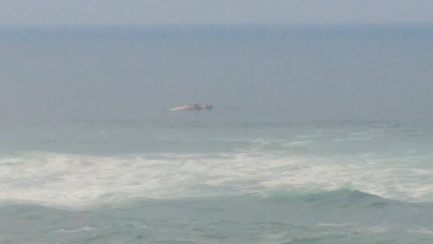 The dead whale floating off the coast - picture from facebook.